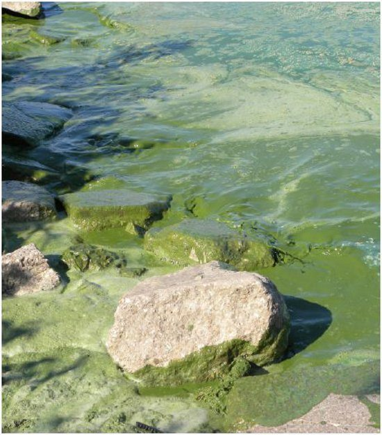 algae_great_lakes