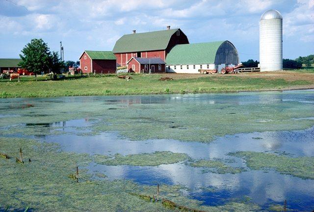 algaefarm